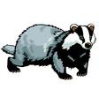 standing badger vector image vector image