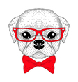 Cute pug boy portrait with bow tie hipster glasses vector image vector image