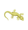 detailed flat icon of small-spotted lizard vector image