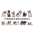 french bulldogs bulldog set funny cartoon vector image