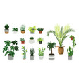 houseplants cartoon home and office cozy plants vector image vector image