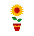 sunflower with green leaves in a pot with a bow in vector image vector image