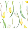 watercolor tulip pattern vector image