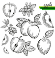 apples vector image vector image