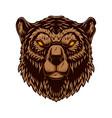 bear head design element for logo label sign