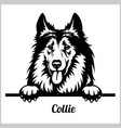 collie - peeking dogs - breed face head isolated vector image