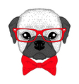 Cute french bulldog boy portrait with bow tie vector image vector image