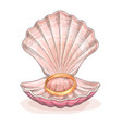 gold wedding ring in an opened seashell vector image