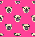 seamless pattern with face of pug dog on pink vector image vector image