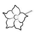 dipladenia flower vector image vector image