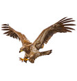 eagle flying attack hand draw on white vector image
