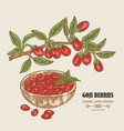 hand drawn goji berries on a branch colored vector image