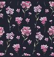 watercolor floral phlox pattern vector image vector image