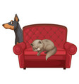cute cat and dog on couch vector image