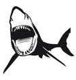 great shark with opened mouth vector image vector image