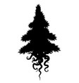 roots conifer silhouette vector image