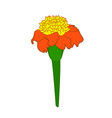 tagetes flower vector image vector image