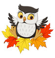 cute owl cartoon sitting on autumn leaves vector image vector image
