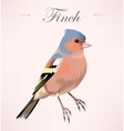 finch vector image