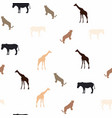 giraffe leopard and zebra on white background vector image