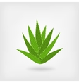 green aloe vera vector image