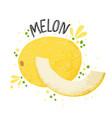 hand draw melon yellow ripe vector image vector image
