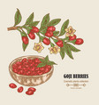 hand drawn goji berries on a branch colored vector image vector image