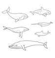 sea mammals cetacea in outlines - vector image vector image