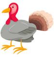 funny turkey farm animal cartoon character vector image