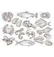 seafood sketch vintage fish drawing food vector image vector image