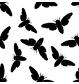 Seamless pattern with cicada Cicadidae vector image vector image