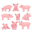 set of pigs in different poses cute farm vector image
