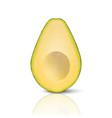 3d realistic cut half seedless avocado vector image vector image