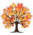 Autumn tree Maple vector image