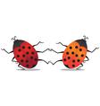 Dancing beetles vector image vector image