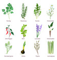 herbs and spices camomiles thyne lemongrass wild vector image vector image