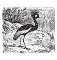 Crested crane vintage