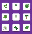 flat icon nature set of rosemary evergreen maple vector image