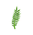green leaf of tropical plant from jungle nature vector image vector image
