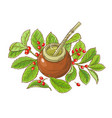 mate tea vector image vector image