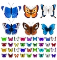 set colorful butterflies vector image