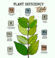 plant deficiency guide - planting issues vector image