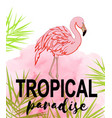 tropical background with flamingo vector image vector image