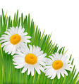 Nature background with beautiful flowers vector image vector image