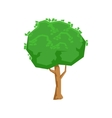 Tall Green Lime Tree Natural Landscape Design vector image vector image