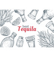 tequila label mexican alcohol drink drawing vector image