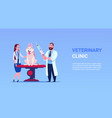 veterinarian doctors examining dog vet clinic and vector image