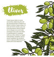 border with colorful olives pattern vector image