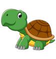 cute turtle cartoon character vector image