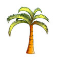 palm jamaican coconut tropical tree color vector image vector image